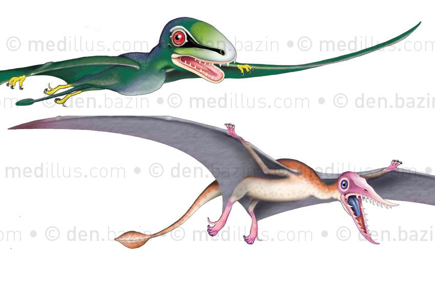 Rhamphorhynchus et anurognatus