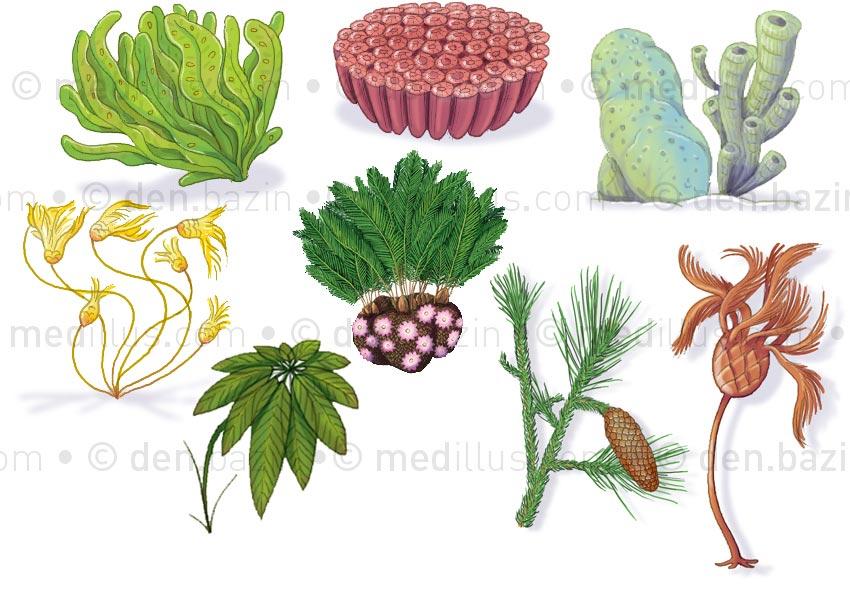 Végétaux préhistoriques