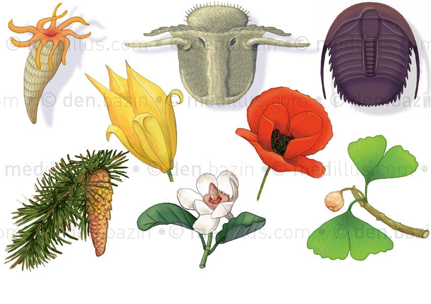 Animaux et végétaux de l'évolution