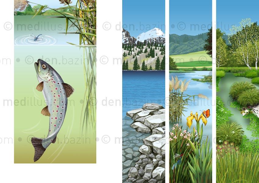 Repas et types de lacs