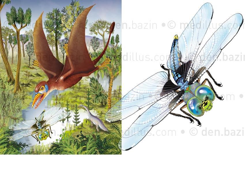 Sordes pilosus et libellule