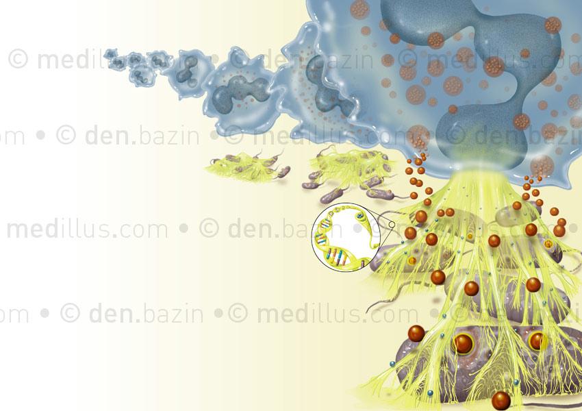 Le triple effet anti-bactérien de l'ADN