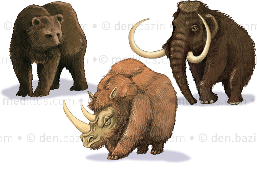 Ours, mammouth et rhinocéros laineux
