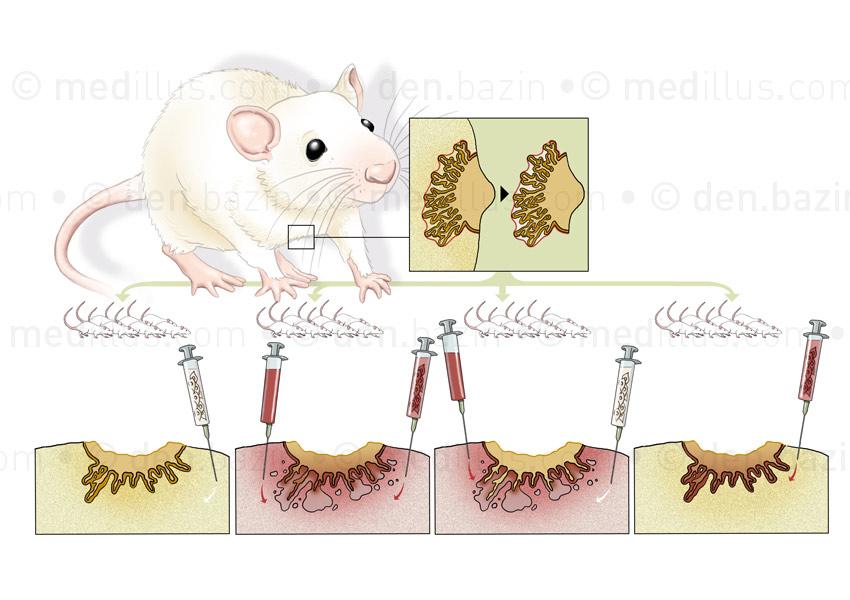 La mutation ne fait pas le cancer