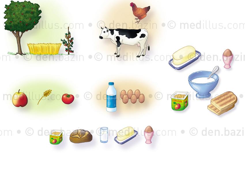 Familles d'aliments et petit déjeuner