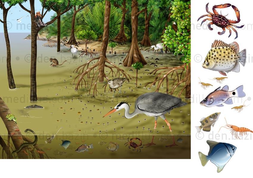 La mangrove, dépliant p.1 et 4