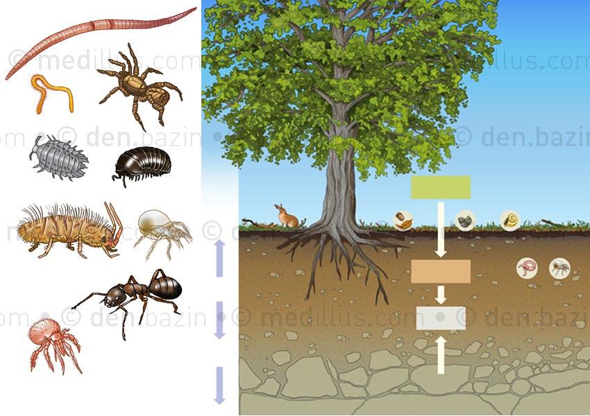 Décomposition des sols