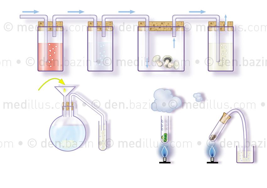 Diverses expériences pour mettre en évidence des gaz ou autres éléments