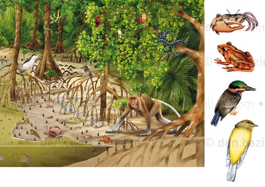 La mangrove, dépliant p.2 et 3