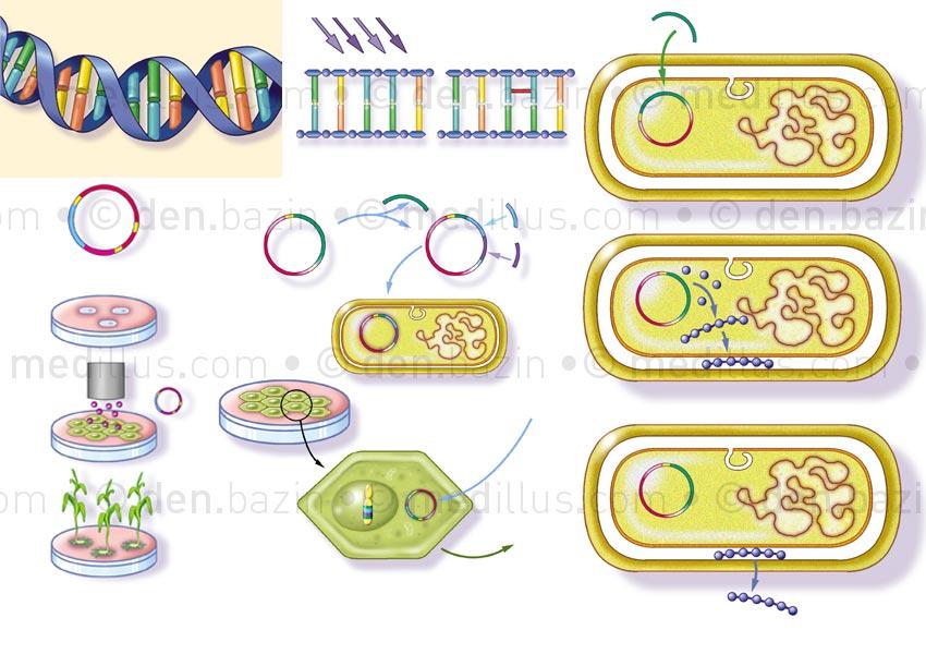 Génétique et manipulations