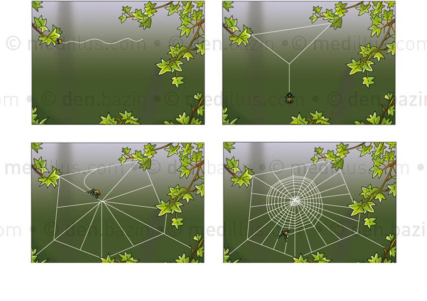 Comment l'araignée tisse sa toile