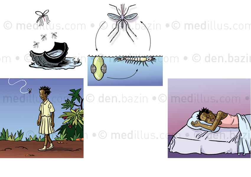 Larve de moustique et paludisme