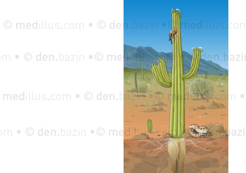 Végétal extrême : le cactus