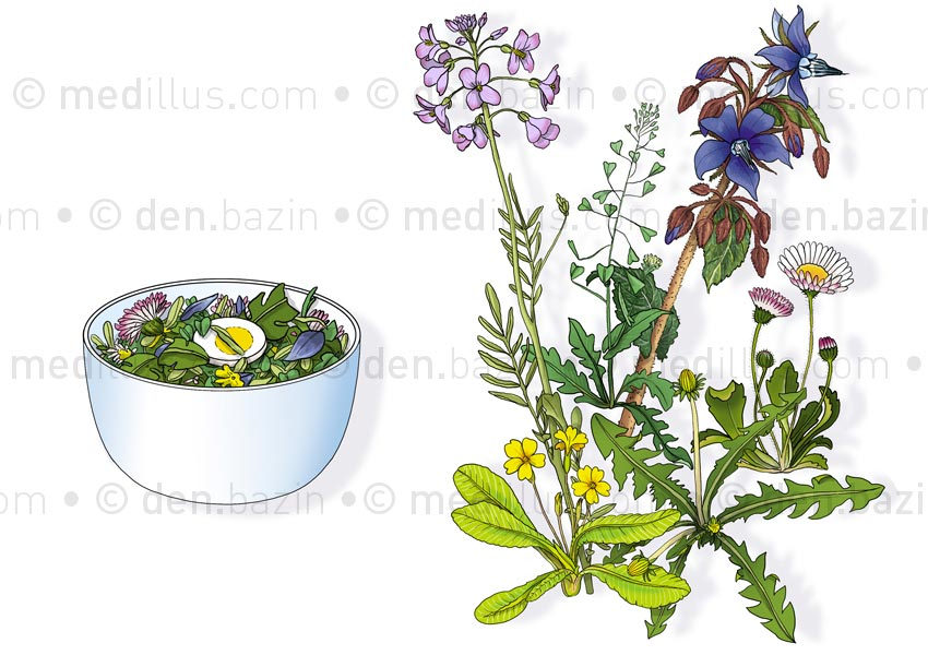 Salade de fleurs des prés