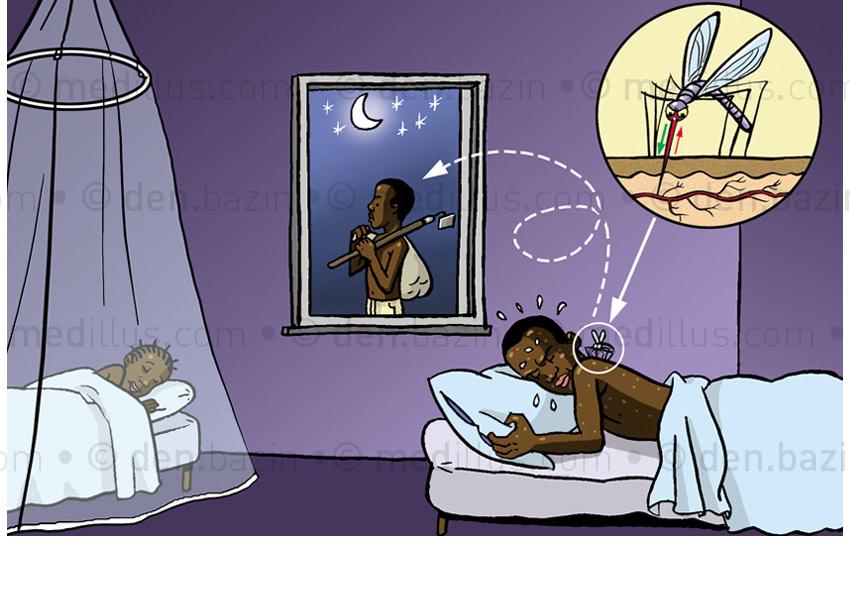 Transmission du paludisme