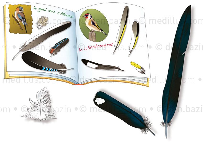 Cahier de plumes et plumes de pie