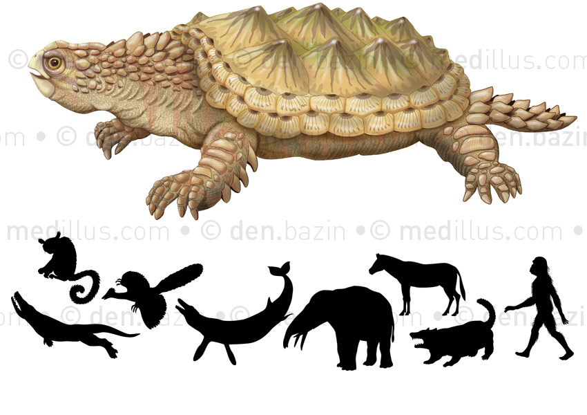 Proganochelys et éléments de l'évolution