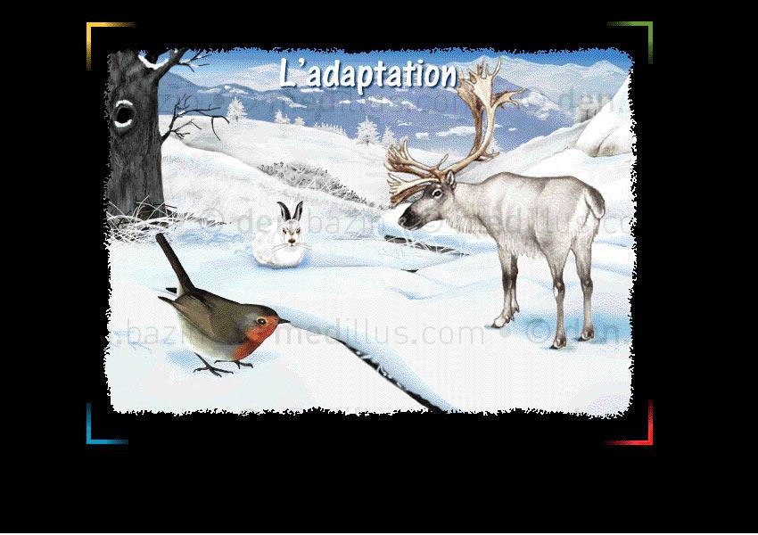 L'adaptation hiver