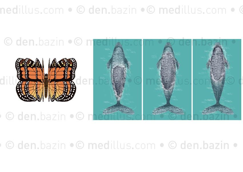Animations papillon - baleine