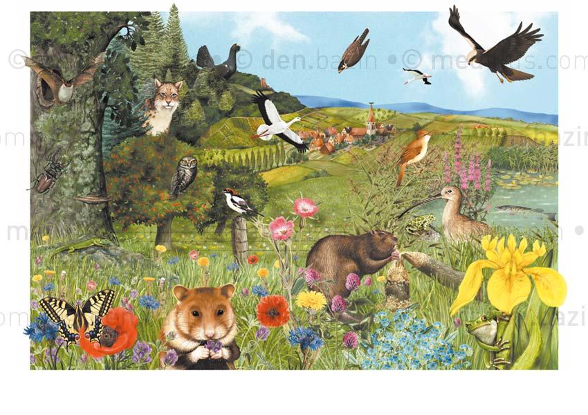 Les animaux protégés en Alsace