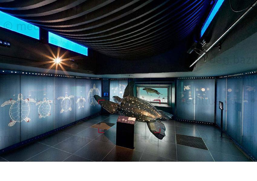 Salle d'exposition des espèces