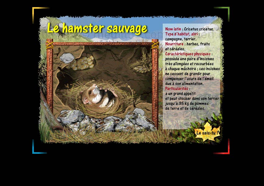 Page Le hamster sauvage