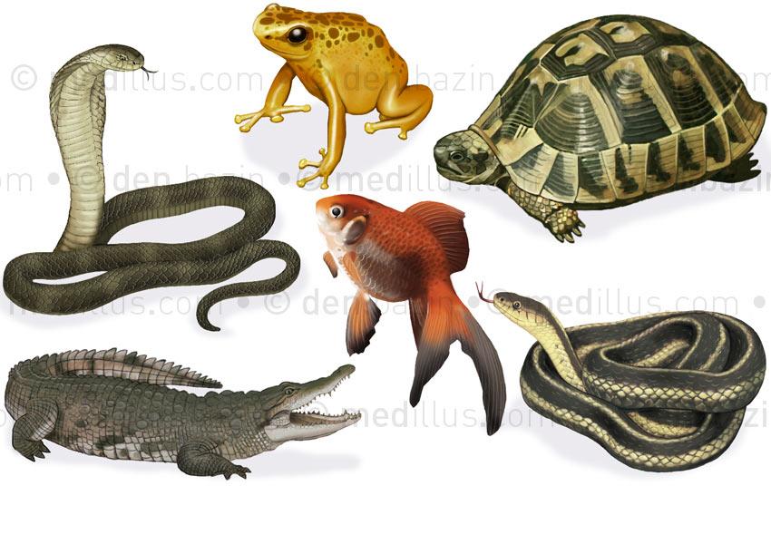 Reptiles, batracien et poisson
