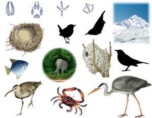 Image Doc – Écosystèmes