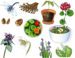 Image Doc – Plantes