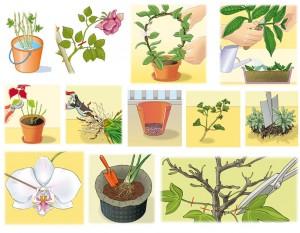 Larousse jardinage