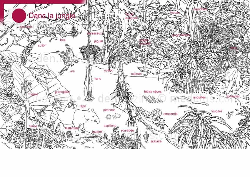 La jungle (crayonné légendé)