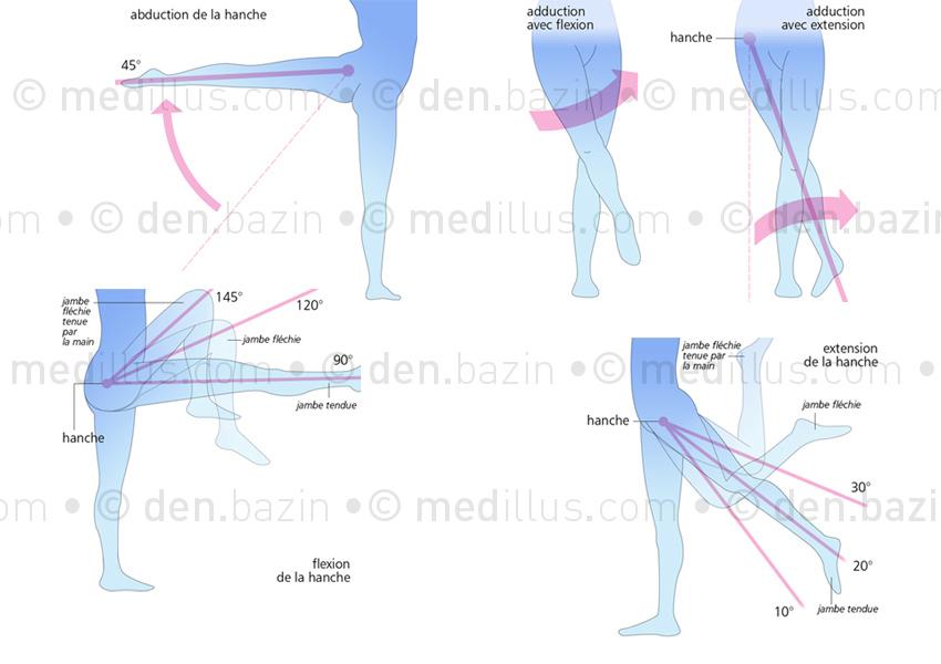 Amplitudes de mouvement de la hanche